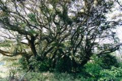 別府の知られざるパワースポット「姫山メンヒル」は樹々も歪む異空間